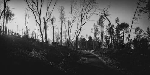 Farran Woods by SewerRar