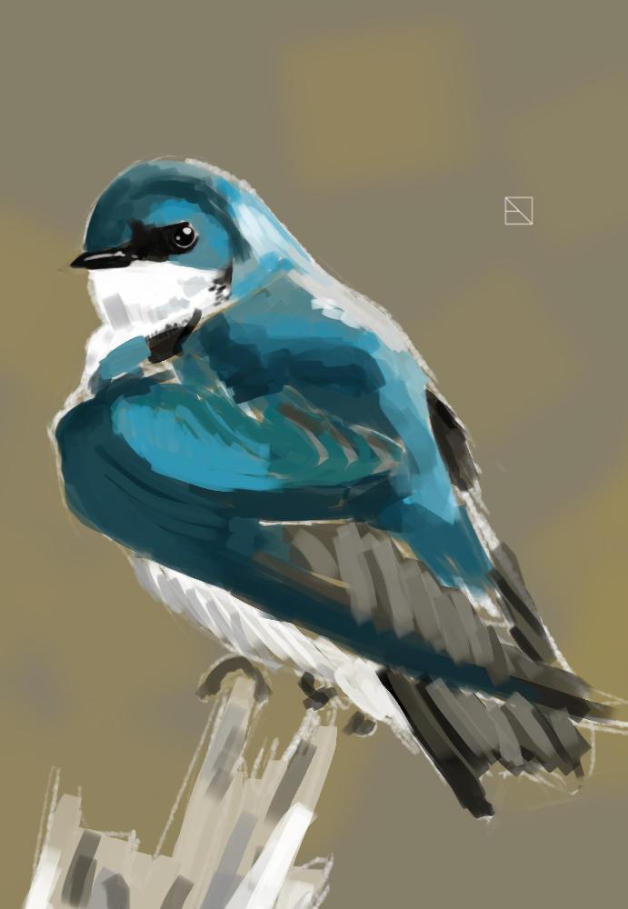 Bird speedpaint by IvurNave