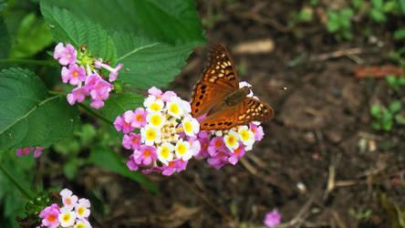 Butterfly2 by PandarenBabe