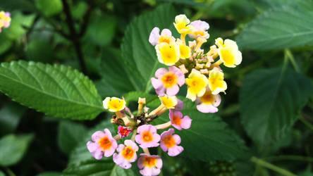 Little Flowers by PandarenBabe