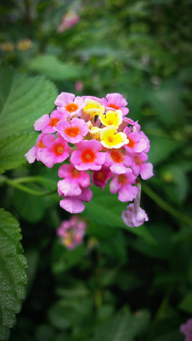 Little Flowers 2 by PandarenBabe