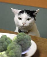 OMG Broccoli by Yumkie