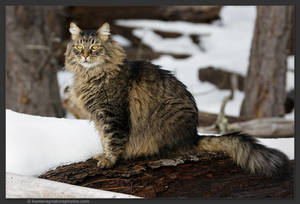 Cat With No Name 4 by kootenayphotos