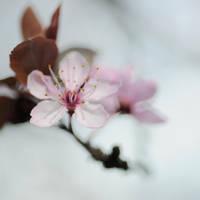 taste of spring by MorkOrk