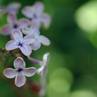 lilac meets green by MorkOrk