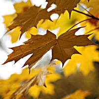 autumn fires by MorkOrk