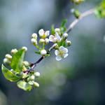 a breath of spring... by MorkOrk