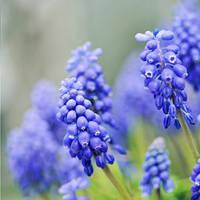 ... has its blue ribbon by MorkOrk