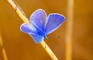 Blue, blue, blue... again by Samantha-meglioli