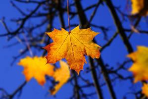 Last autumn moments by Samantha-meglioli