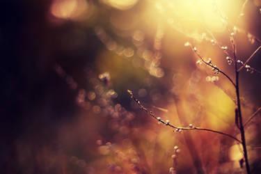 Unloved Heart by Samantha-meglioli