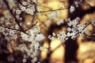 Spring by Samantha-meglioli