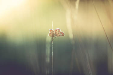Fall of summer by Samantha-meglioli