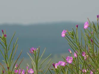 Miss the spring by hrabianek