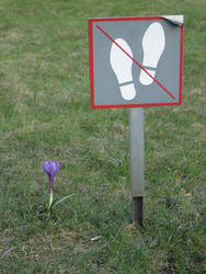 Innocent flora... by hrabianek