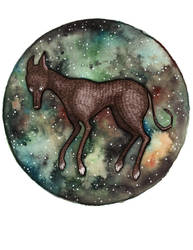 Canis Major by FawnLorn