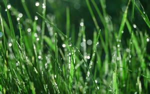 Dew by lassekongo83