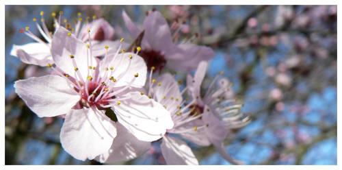 printemps by bahmoi