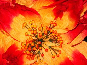 Paper Flower by NinaChild