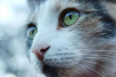 Cat's Gaze by lotrdeana17