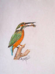 Kingfisher by NaumenkoO