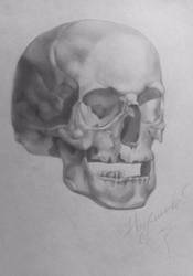 Pencil skull by NaumenkoO