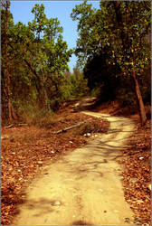 jungle way by strangerinthecrowd