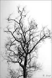 leafless tree III by strangerinthecrowd