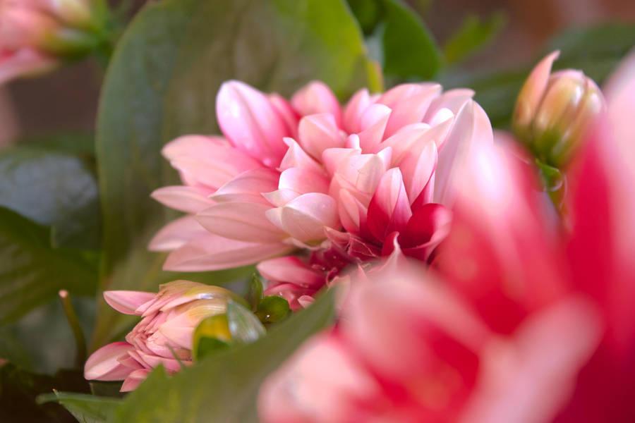 Kukka, Flower, Fleur by AneurysmGuy