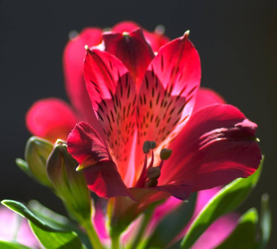 Punainen kukka by AneurysmGuy