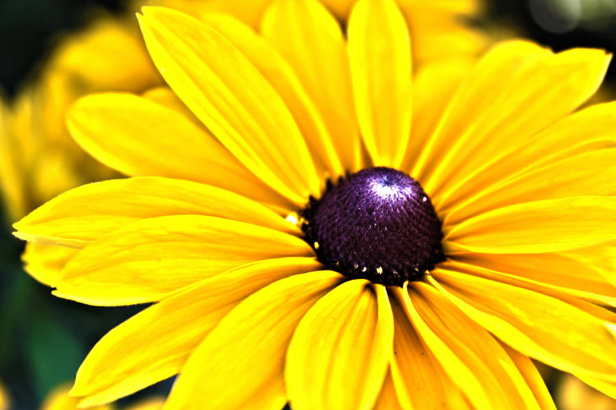 Big Yellow Flower by AneurysmGuy