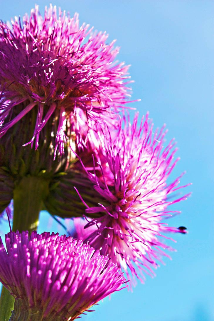 Purplish flower by AneurysmGuy