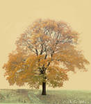 Ruskea Puu by AneurysmGuy