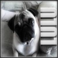 My pug by xKaylen