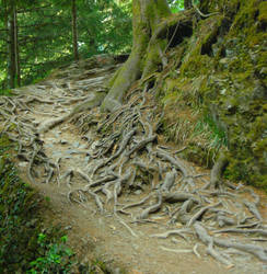 Roots by nerkn
