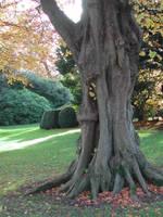 tree 8 by stormsorceress