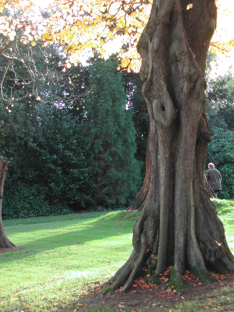 tree 9 by stormsorceress