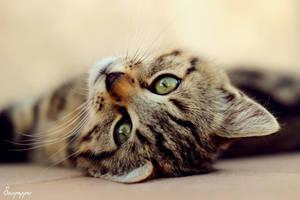 Kitty II by sourpepper
