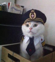 Captin Cat by TheFunnyAmerican