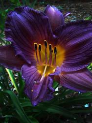 My mom's garden_1 by PhotoshopGirl29
