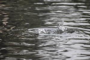 Water Stock 5 by Eternal-Polaroid