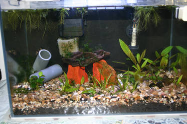 Fresh h2O fishtank by ReiGau