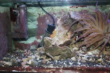 Salt h2O tank by ReiGau