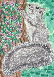 Gray  squirrel  watercolor  aceo painting by tulipteardrops