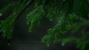 Raindrops by zipfileART
