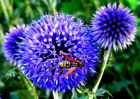 The Blue and the Bee by Cloudwhisperer67