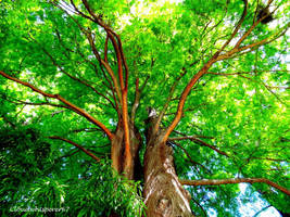 Green Foliage Whispers - August 2012 by Cloudwhisperer67