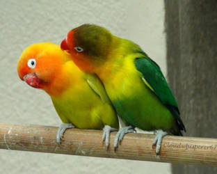Kiss me if you can! --- Masked lovebirds by Cloudwhisperer67