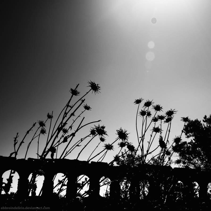 rome 82 by AlexGrifo