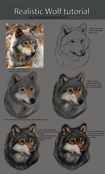 Realistic Wolf Tutorial by TheMysticWolf